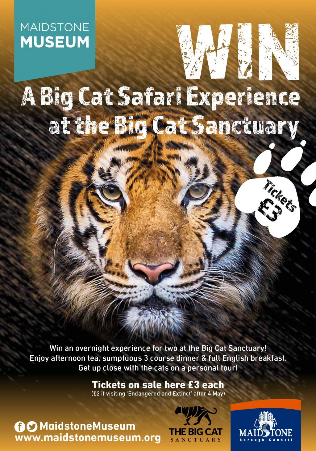 Win a Big Cat Safari Experience with Maidstone Museum