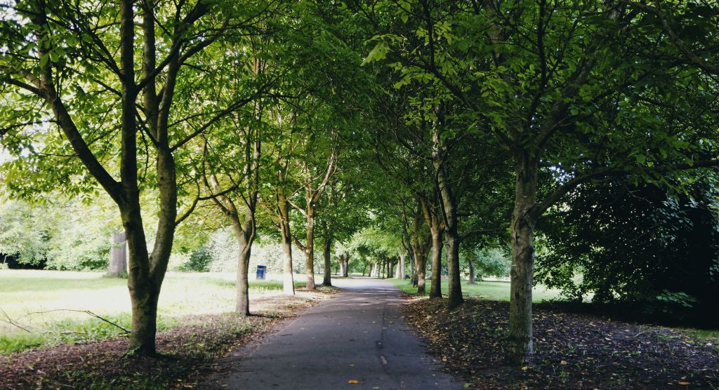 Maidstone Borough Council to limit access to parks   image