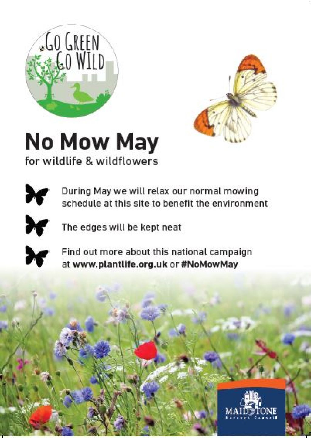 Maidstone takes part in 'No Mow May'  image